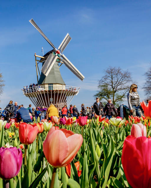image of people at the windmill in Kuekenhof tulip gardens