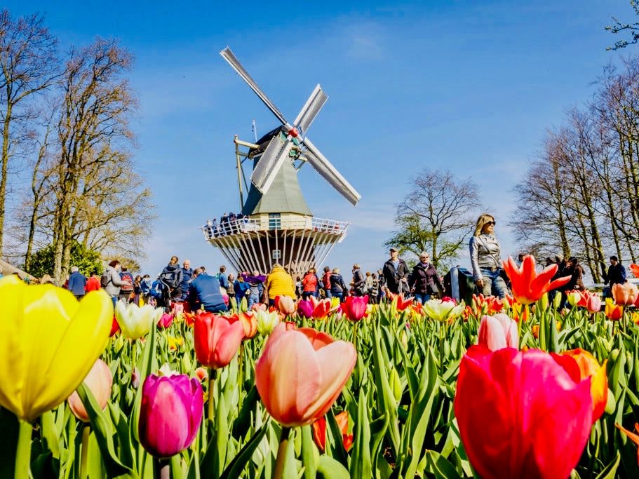 Flower auction, cheese farm and Keukenhof