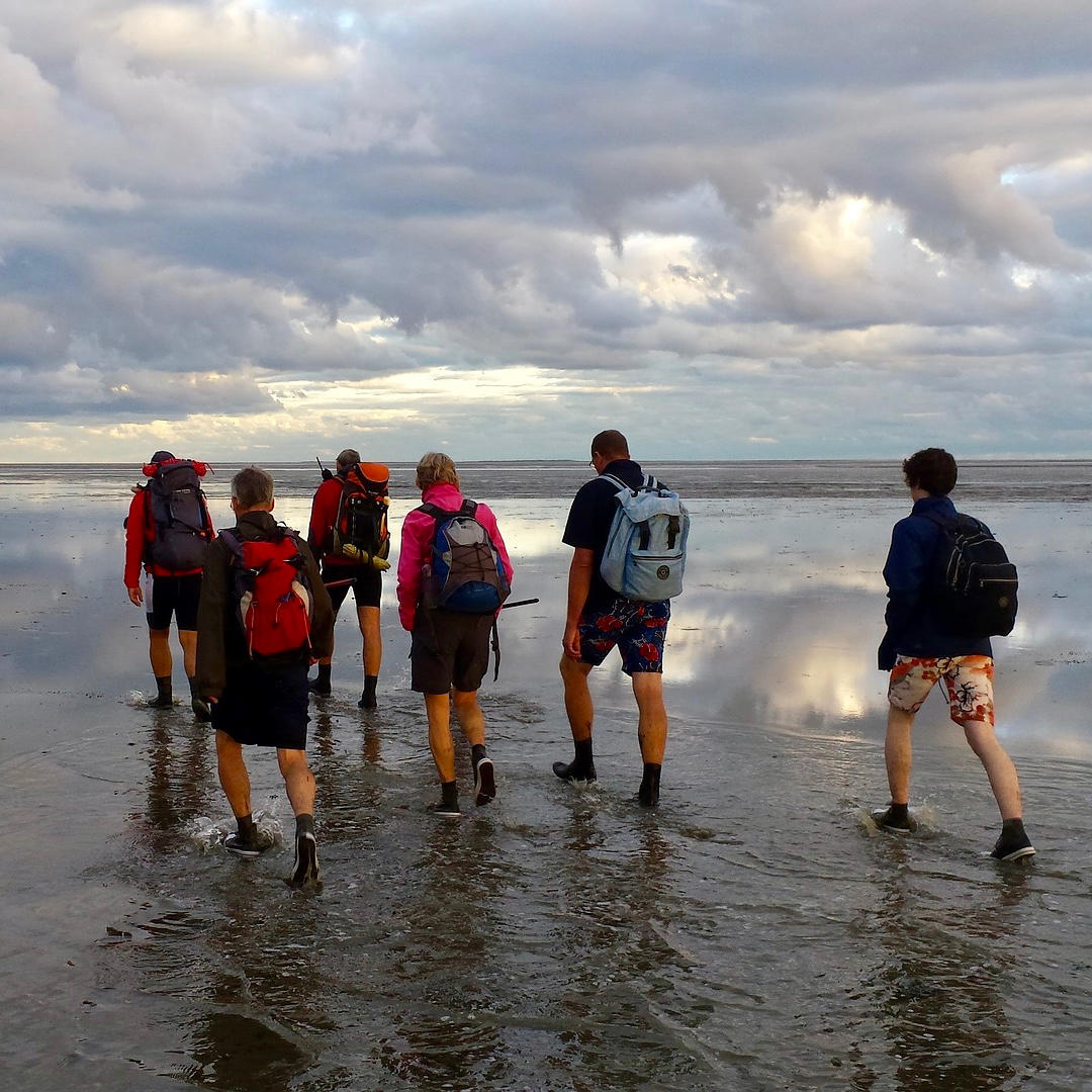 a image of a group of people who are mudflat walking in the wadden sea during low tide