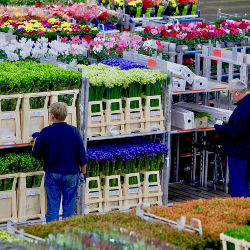 a image of two workers at the flower auction
