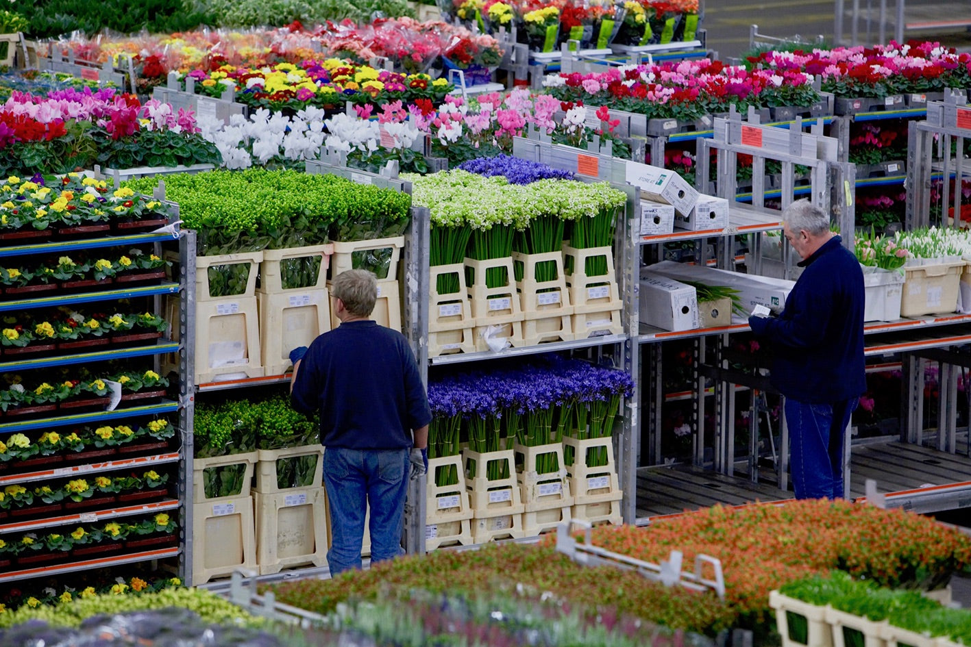 Visit the famous flower auction