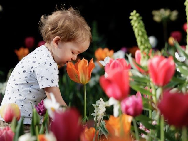 private tour with children to keukenhof and the flower auction with tulip day tours