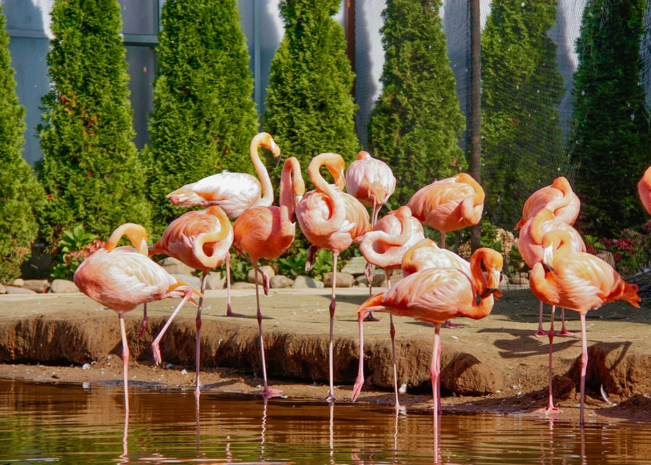 flamingos in the netherlands with tulip day tours