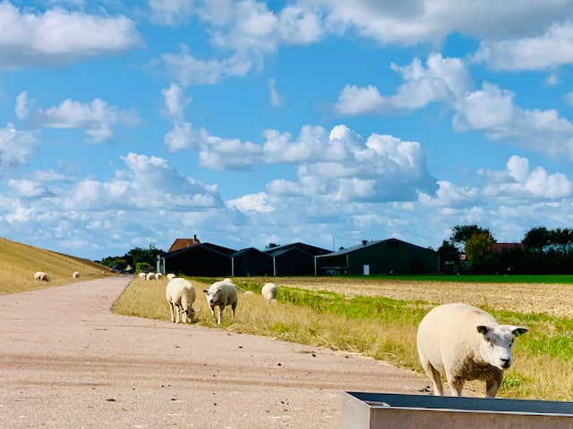discover Dutch cuisine on Texel Island with Tulip Day Tours in Holland