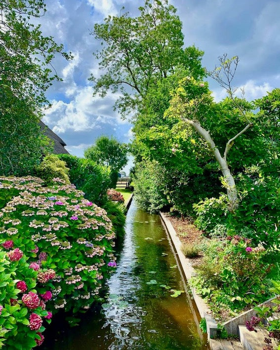 an image of a colorful flowers in Giethoorn