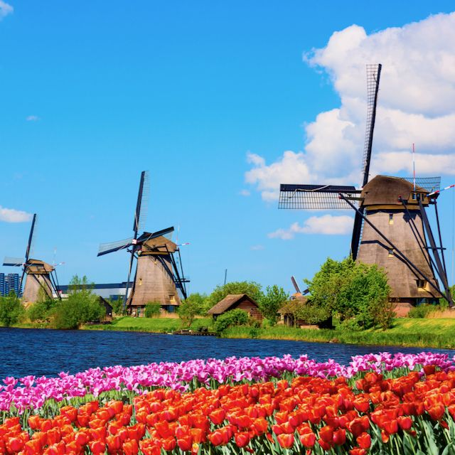 all the windmills on a row at Kinderdijk with flowers in front of them