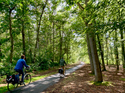 Discover the beautiful island of Texel by e-bike Tulip Day Tours