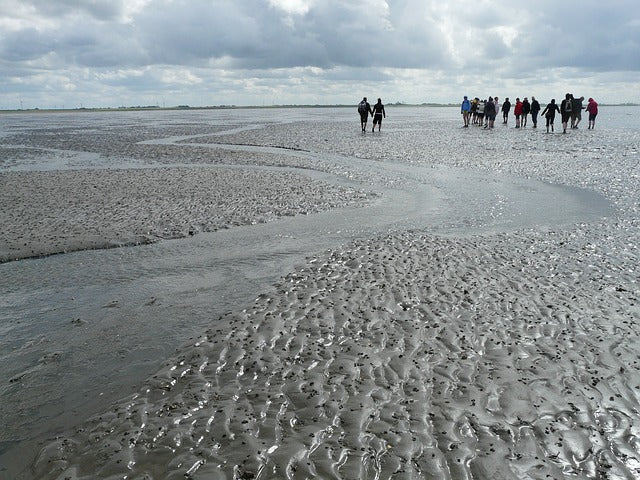 a group of people mudflat hiking the wadden sea during low tide in november