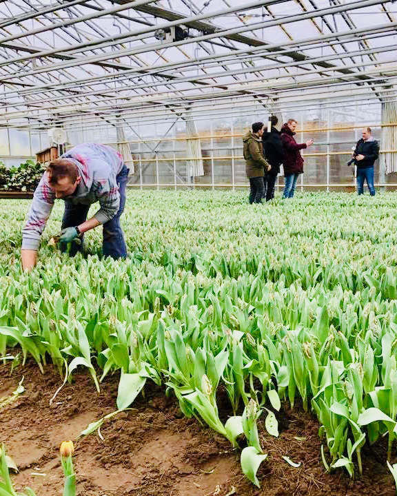 Image of people talking in a tulip greenhouse