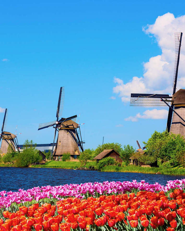 Visit Kinderdijk Windmills with Tulip Day Tours