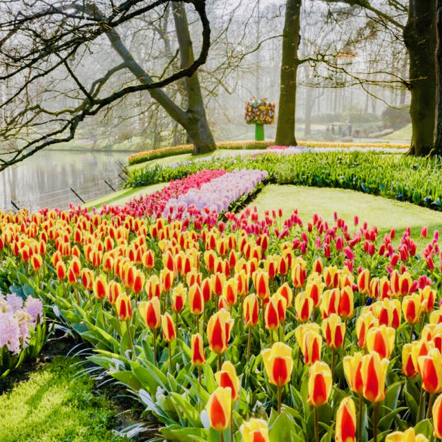 a image of a group of coloured tulips at spring flower park keukenhof
