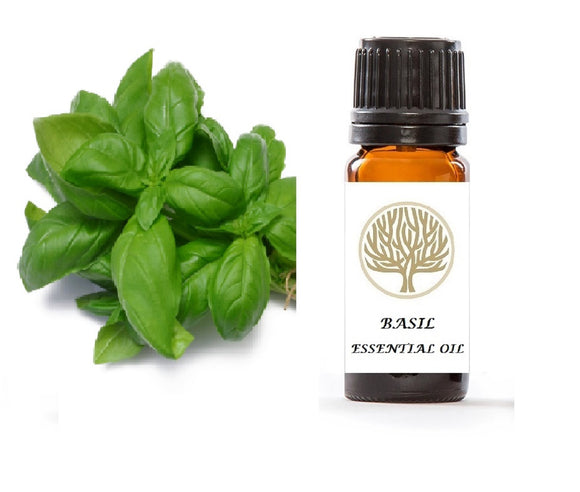 Basil Essential Oil 10ml - ekoface