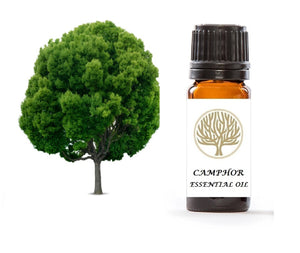 Camphor Essential Oil 10ml - ekoface