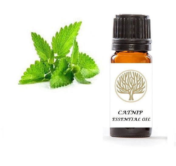 Catnip Essential Oil 10ml - ekoface