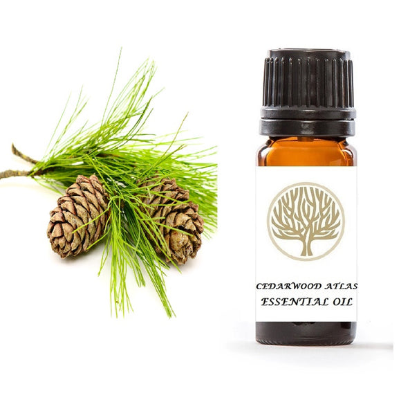 Cedarwood Atlas Essential Oil 10ml - ekoface