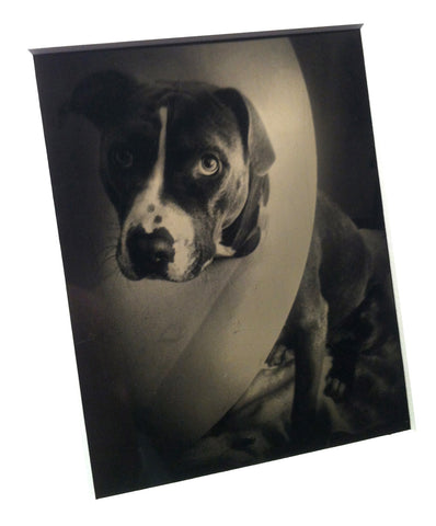 tintype, digital tintype, digital tintypes, tintype print, wet plate collodion, how to make a tintype, ambrotype, make a tintype, make my photo a tintype print