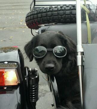Doggles Biker Harness