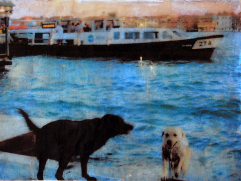 Swimming Dogs #2 in Giudecca Canal, Venice, Italy, Mixed Media on Panel, 2010 Rachael Grad Fine Art