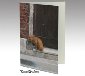 Cat and Dog Venice Italy Stationery Note Card Set by Toronto Artist Rachael Grad front