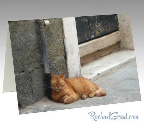 Orange Cat Sleeping Stationery Note Card by Canadian Artist Rachael Grad