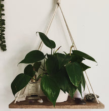 Load image into Gallery viewer, wood macrame wall shelf with plants