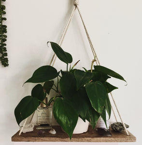 wood macrame wall shelf with plants