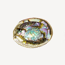 Load image into Gallery viewer, abalone shell with shiny pearl finish bohemian altar wiccan witch gifts