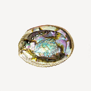 abalone shell with shiny pearl finish bohemian altar wiccan witch gifts