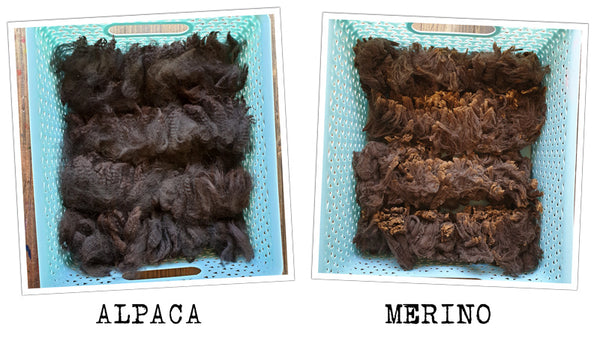 Alpaca and merino fleece layed out in baskets