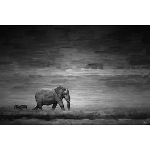Elephant - Art Print on Brushed Aluminum