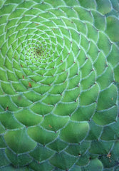 Sacred Geometry Applied, with David Metcalfe