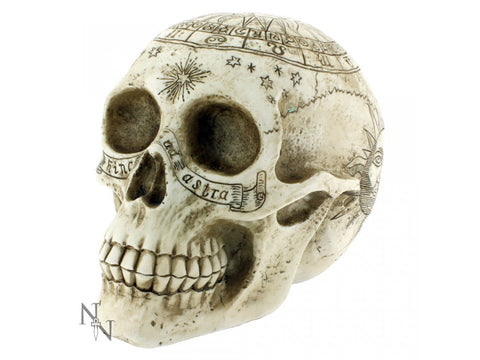 Astrological Skull 20cm - Eldertree Apothecary