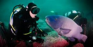 Discover Scuba Diving in Sydney