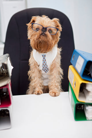 Why You Should Take Your Pet to Work