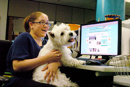 More Companies Taking Pets to Work