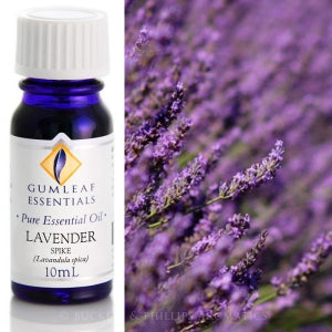 Lavender (Spike) essential oil 10ml
