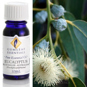 Eucalyptus (Blue Mallee) Essential oil 10ml