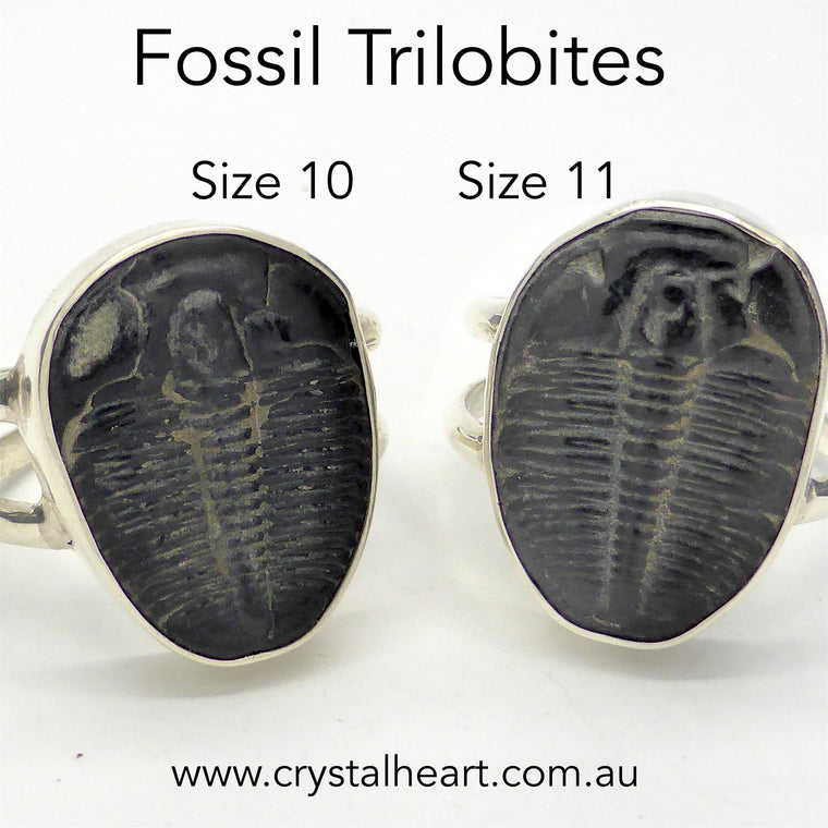 Ring Fossil Trilobite