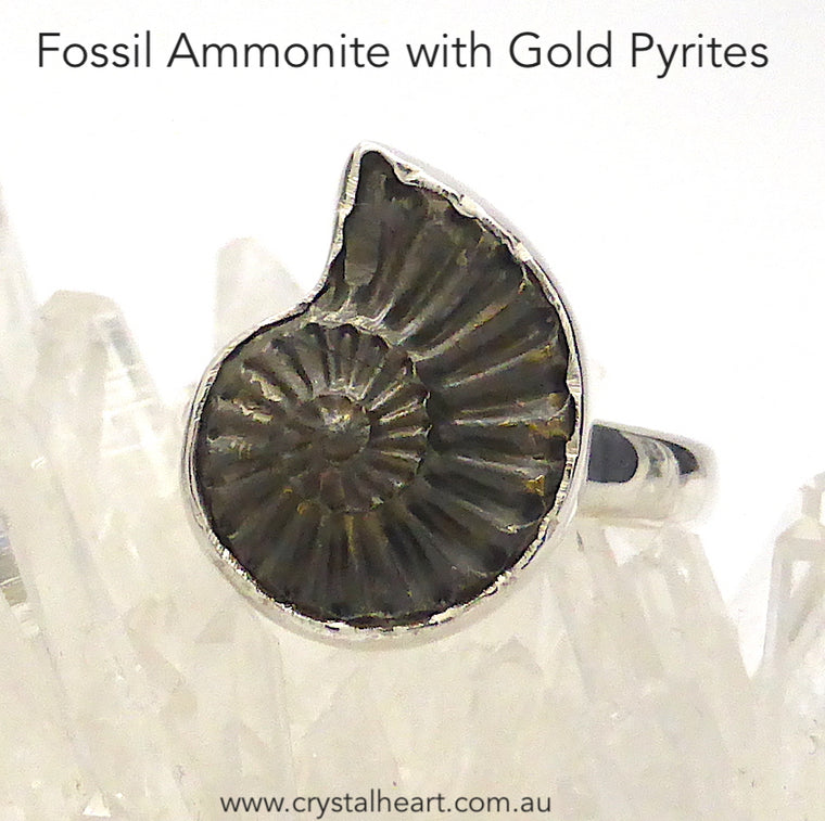 Ammonite Fossil Ring, Gold Pyrites, 925 Silver, s1