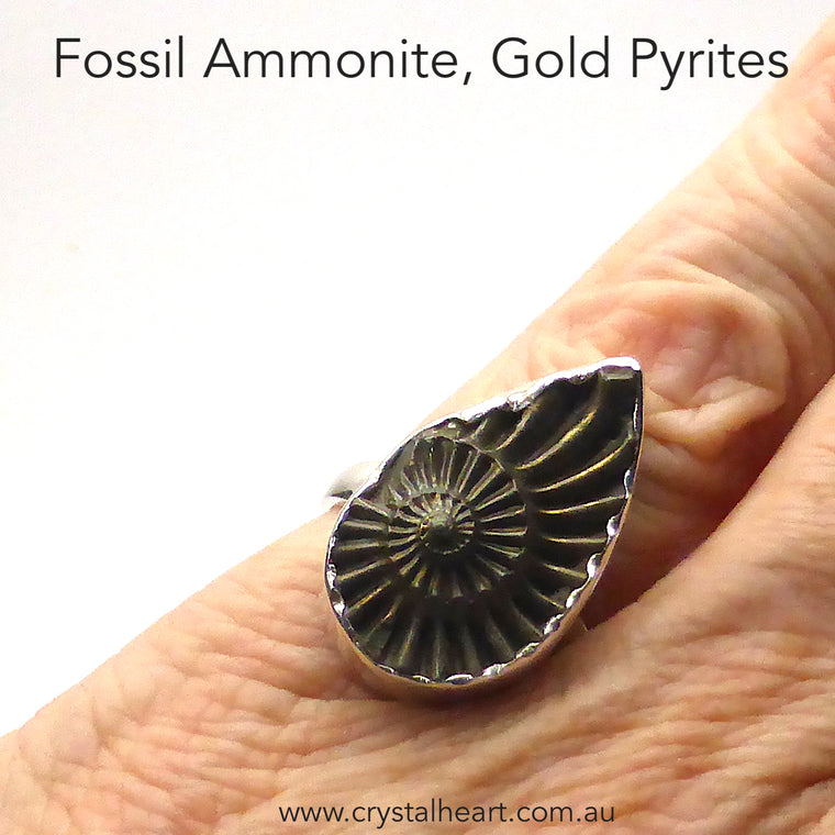 Ammonite Fossil Ring, Gold Pyrites, 925 Silver, s2