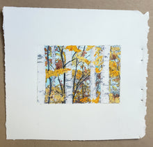 Load image into Gallery viewer, October Birches