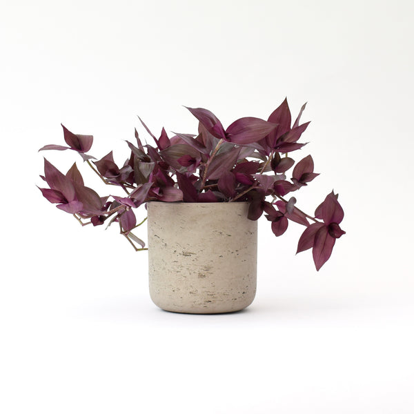 Concrete plant pot by Garden Trading