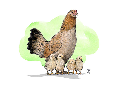 Mother Hen - 5x7 blank card