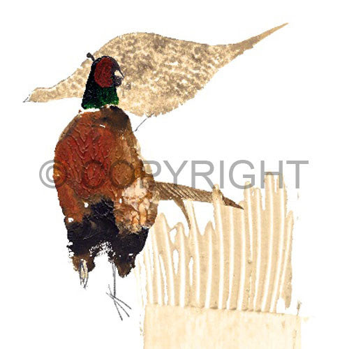 Male & Female Pheasants