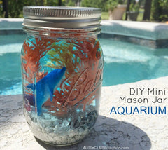 DIY Mini Mason Jar Aquarium