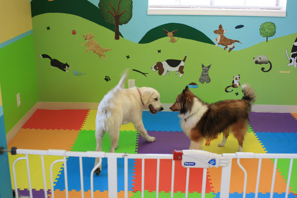 Dogs playing in front of Paws Park Wall Decals