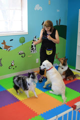 Dogs training at East Bay Dog Training