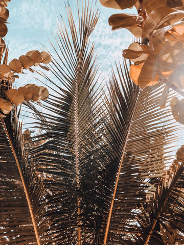 Framed Art | Palm Leaves in Tulum