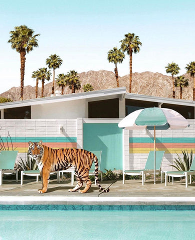 Framed Art | Poolside Tiger