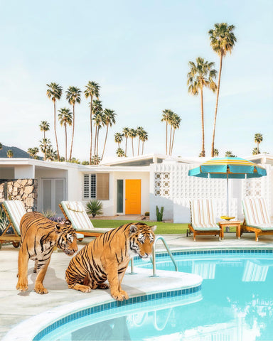 Framed Art | Tigers At The Pool